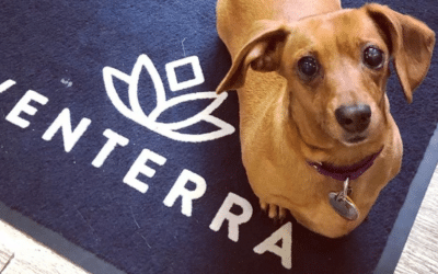 National Adopt a Shelter Pet Day 2021